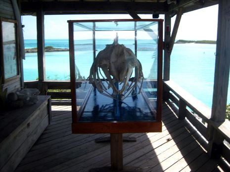 Bruce Ray whale case Exuma Park courtesy Gregory Kontos.JPG
